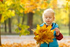A cute little girl is playing in the park with autumn leaves. Outside. stock photos