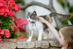 Cute little girl and a cat. Outdoors Stock Image