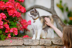 Cute little girl and a cat outdoors. On hot summer day in Italy Royalty Free Stock Photo