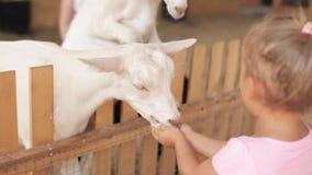Cute little girl feeding a goat at farm.