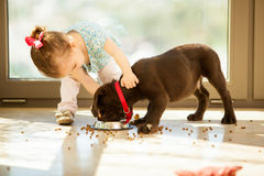 Cute little girl feeding her puppy Royalty Free Stock Photography