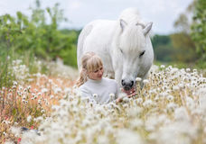 Cute little girl feeding a white Shetland pony stock photos