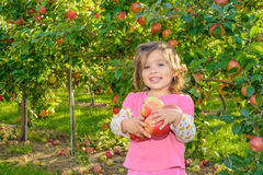Cute little girl in the garden with apples Royalty Free Stock Image