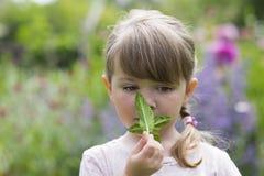 Cute little girl in garden smells of mint sheet Royalty Free Stock Image