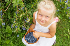 Cute little girl gathering blueberries Stock Images