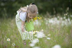 Cute little girl harvesting flowers. In a bucket Royalty Free Stock Photos
