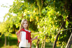 Cute little girl harvesting grapes in a vineyard Stock Photography
