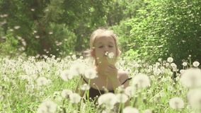 Cute little girl having fun looks at Dandelion seeds while relaxing in the park. Cute little girl having fun looks at Dandelion seeds while relaxing in the park stock video