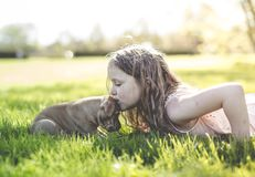 Cute little girl holding her funny boxer dog Stock Image