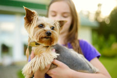 Cute little girl holding her funny yorkshire terrier dog Royalty Free Stock Photography