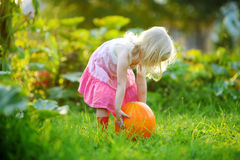 Cute little girl holding a pumpkin Royalty Free Stock Photography