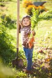 Toddler girl with bunch of organic carrots. Cute little girl holding shovel and bunch of organic carrots and smiling, countryside. Little gardener working in Stock Photo