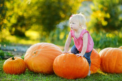 Cute little girl and huge pumpkins Stock Photos