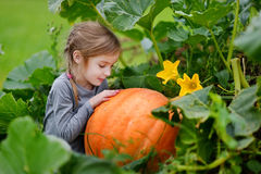 Cute little girl hugging a pumpkin Royalty Free Stock Photo