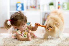 Free Cute Little Girl Is Feeding Sausages To Her Dog Royalty Free Stock Photos - 91169808