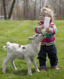 Cute little girl with lamb. Cute, young girl, bottle feeding milk to a Katahdin lamb Royalty Free Stock Photos