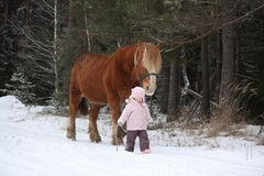 Cute little girl leading big draught horse in winter Royalty Free Stock Image
