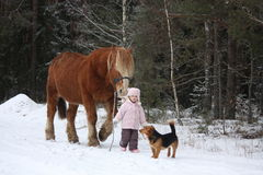 Cute little girl leading big draught horse in winter Royalty Free Stock Images