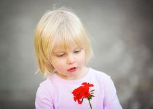 Cute little girl looking at her red flower Stock Images