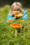 Cute little girl looking at mushrooms in summer - autumn forest Stock Images