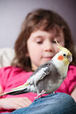 Girl with a cockatiel. Cute little girl with a pet cockatiel on her knee stock photography