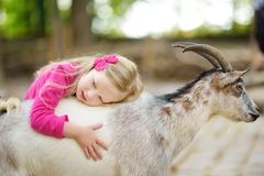 Cute little girl petting and feeding a goat at petting zoo. Child playing with a farm animal on sunny summer day. Stock Images