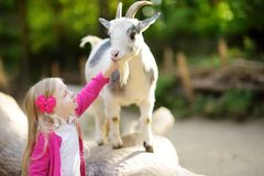 Cute little girl petting and feeding a goat at petting zoo. Child playing with a farm animal on sunny summer day. Royalty Free Stock Photos