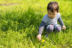 Cute little girl picking flowers on the meadow. On a spring day Royalty Free Stock Photography