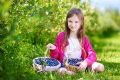 Cute little girl picking fresh berries on organic blueberry farm Royalty Free Stock Images