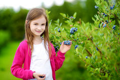Cute little girl picking fresh berries on organic blueberry farm. On warm and sunny summer day Stock Image