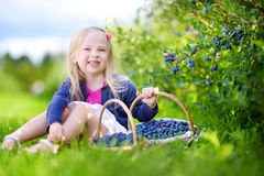 Cute little girl picking fresh berries on organic blueberry farm Stock Photos