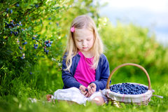 Cute little girl picking fresh berries on organic blueberry farm Stock Photography