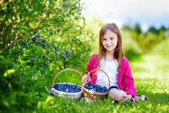 Cute little girl picking fresh berries on organic blueberry farm Royalty Free Stock Image