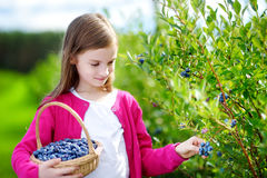 Cute little girl picking fresh berries on organic blueberry farm Royalty Free Stock Photography