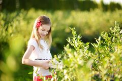Cute little girl picking fresh berries on organic blueberry farm on warm and sunny summer day. Fresh healthy organic food for kids. Cute little girl picking Stock Photos