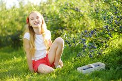Cute little girl picking fresh berries on organic blueberry farm on warm and sunny summer day. Fresh healthy organic food for kids. Cute little girl picking Royalty Free Stock Photography