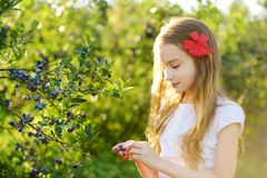 Cute little girl picking fresh berries on organic blueberry farm on warm and sunny summer day. Fresh healthy organic food for kids Stock Images