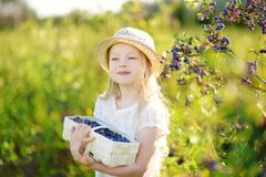 Cute little girl picking fresh berries on organic blueberry farm on warm and sunny summer day. Fresh healthy organic food for kids royalty free stock photography