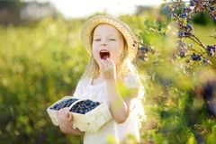 Cute little girl picking fresh berries on organic blueberry farm on warm and sunny summer day. Fresh healthy organic food for small kids Royalty Free Stock Photography