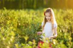Cute little girl picking fresh berries on organic blueberry farm on warm and sunny summer day. Fresh healthy organic food for kids. Cute little girl picking Stock Photo
