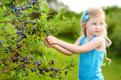 Cute little girl picking fresh berries on organic blueberry farm on warm and sunny summer day Royalty Free Stock Images