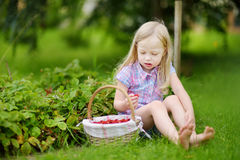 Cute little girl picking fresh wild strawberries on organic strawberry farm royalty free stock images
