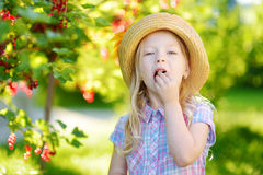 Cute little girl picking red currants in a garden on summer day Stock Photography