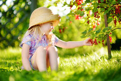 Cute little girl picking red currants in a garden on summer day Royalty Free Stock Photo