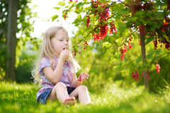 Cute little girl picking red currants in a garden Stock Images