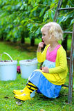 Cute little girl picking sweet cherries in the orchard royalty free stock image