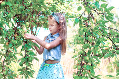 Cute little girl picking up apples in garden Stock Photo