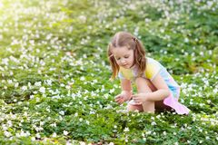 Child in spring park with flowers. Cute little girl in pink dress playing in blooming spring park with first white wild anemone flowers. Child on Easter egg hunt Stock Photos