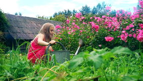 Cute little girl in pink sundress watering pink phlox against the background of the old house stock video