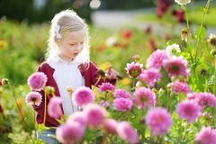 Cute little girl playing in blossoming dahlia field. Child picking fresh flowers in dahlia meadow on sunny summer day. Royalty Free Stock Photos